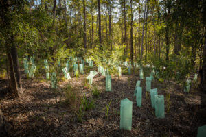 plantation de forêt