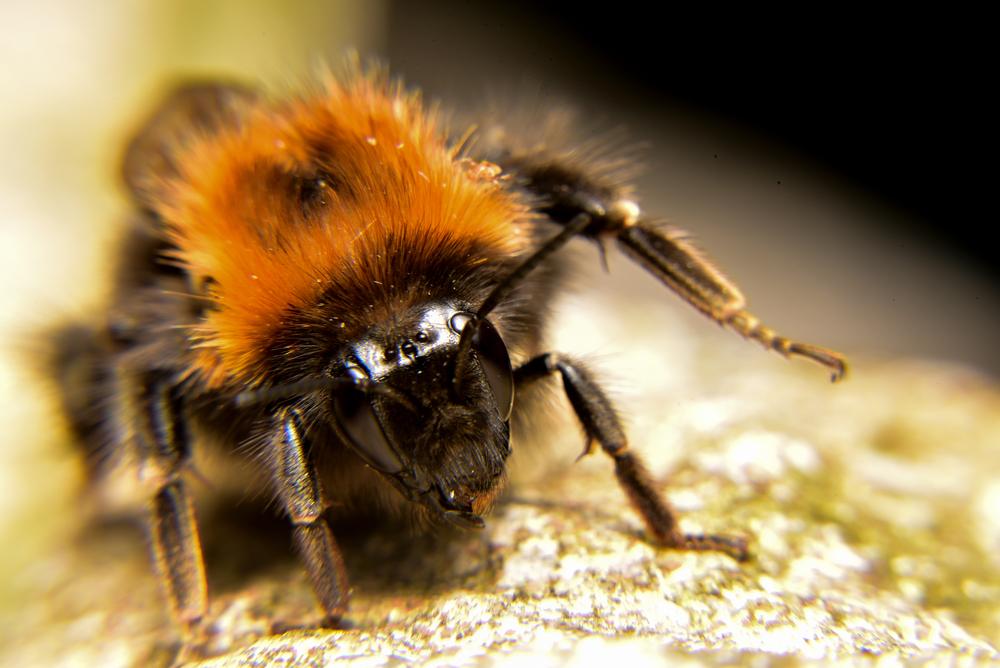 alimentation des abeilles